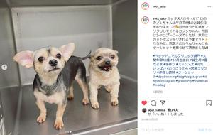 カノンちゃん&カリンちゃんのサムネイル画像