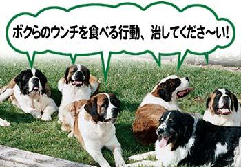 犬の食糞症(自分のウンチを食べてしまう行動)とは?