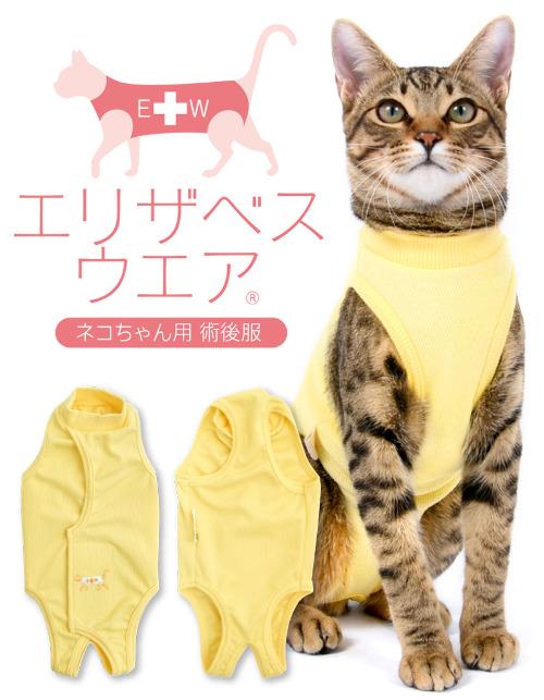 バッククロス猫.jpg